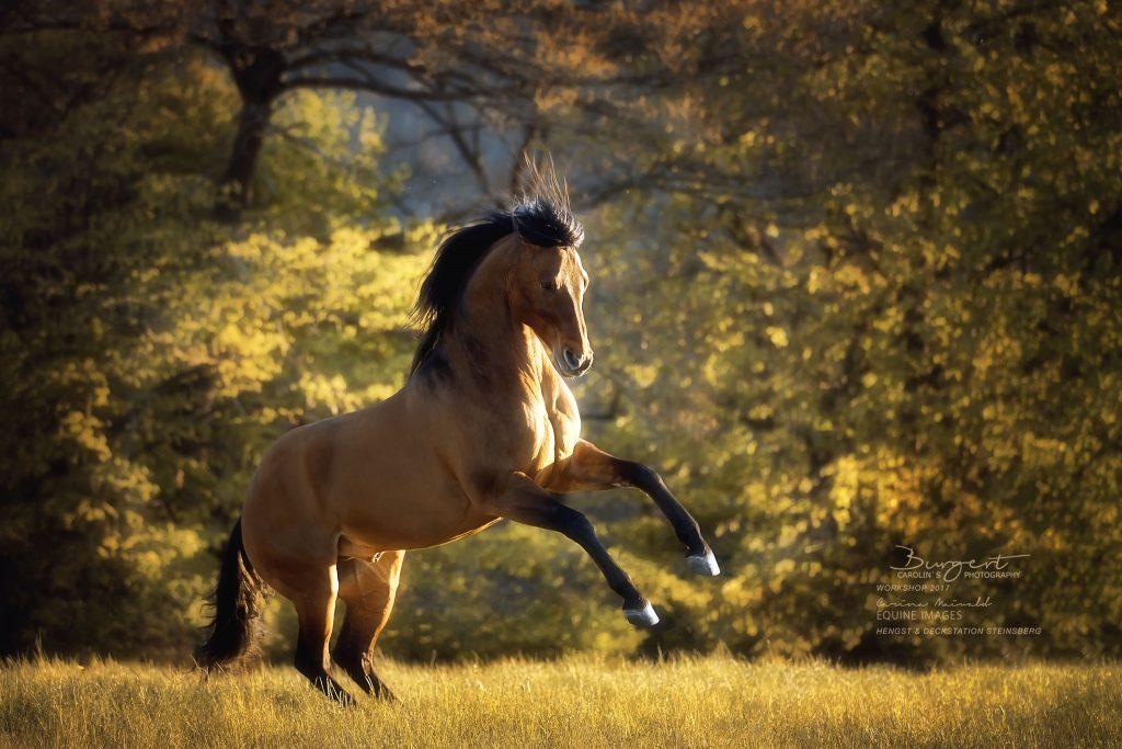 "American Quarter Horse ""Magic Einstein"""