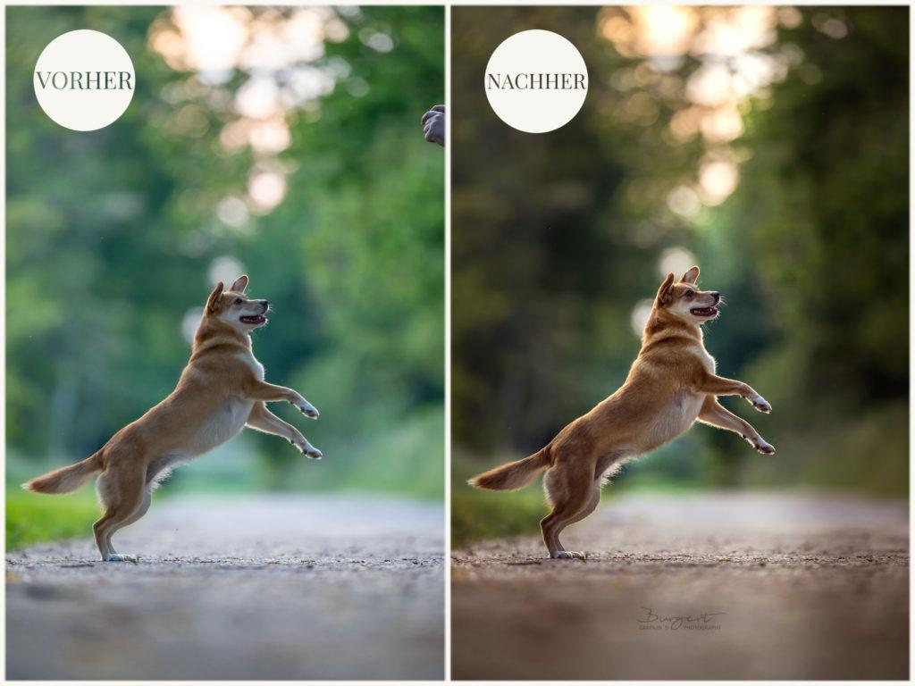 Vorher Nachher Vergleich Fotografie