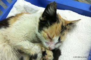 Suus is een zwerfdier Algarve: kitten met een ontstoken gezicht