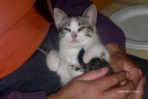 Saar is een zwerfdier Algarve, gered uit de bek van een hond