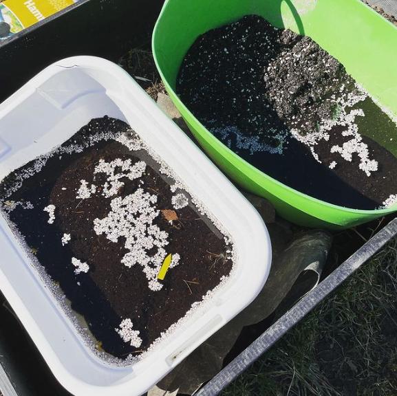 Två baljor med jord och vatten.