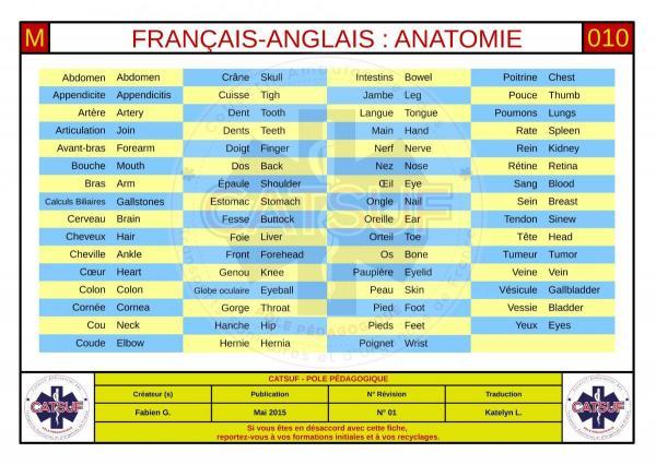 Français-anglais anatomie