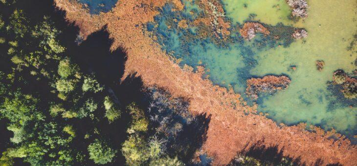 The UN Ecosystem Restoration Agenda
