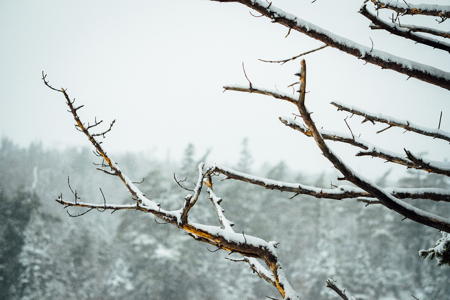 Winter: An Invitation to Grow Stronger