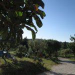 Quinta da Cerejeira