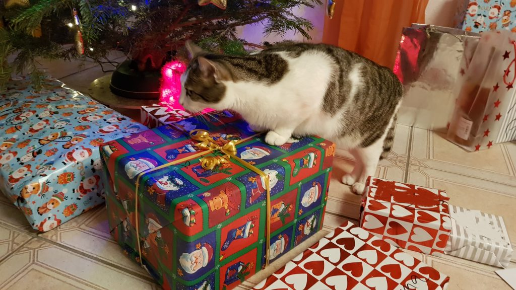 Weihnachtskatze am Geschenke durchstöbern