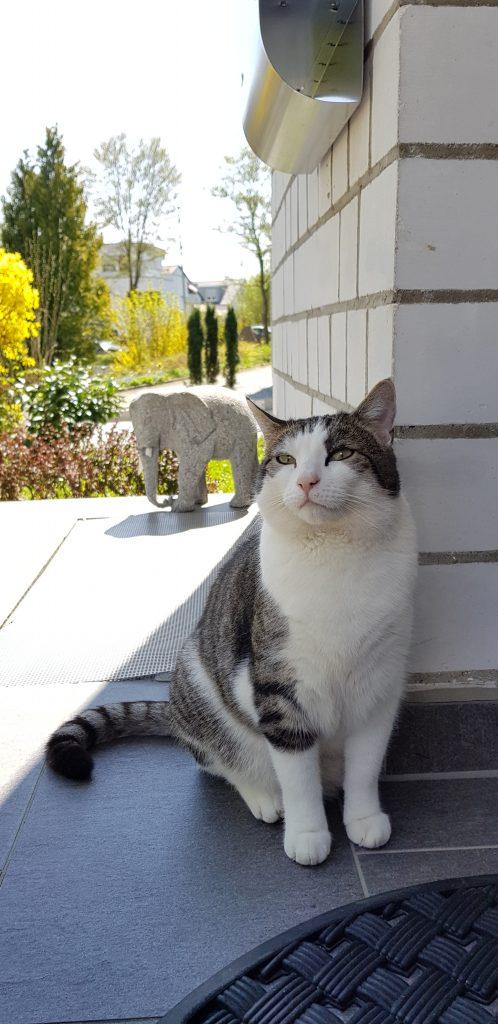 Zufriedene Katze an einem Warmen Sommertag
