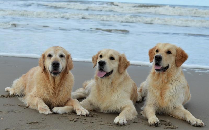 Dixie in het midden met links oma Gina  en rechts halfzusje Hannah