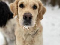 Dixie in de sneeuw