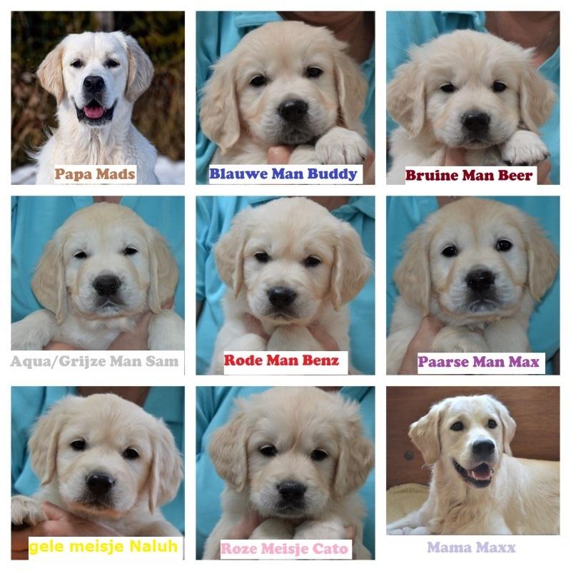 collage pups Mads en Maxx met namen