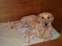 Pups Hannah net geboren...