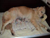 Pups Ruby net geboren...