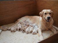 Pups Hannah 6-1-2021