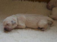 Pups 5 dagen oud...
