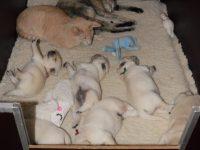 In de werpkist van Ruby vinden de katten nog een lekker plekje...