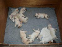 Pups slapen...
