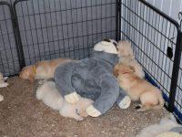Ze slapen het liefst bij elkaar, op en naast de grote knuffels...