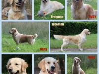 fotocollage-Freeman-Ruby