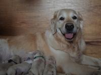 Pups net geboren
