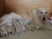 maggie-pups-1-week