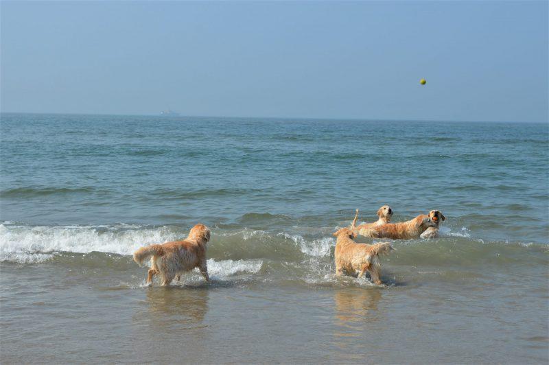 Waar is de bal?