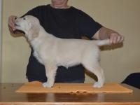 24_pupje-ruim-8-weken-in-stand