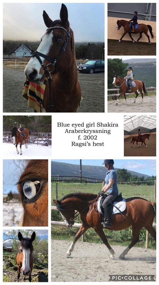 Blue Eyed Shakira
