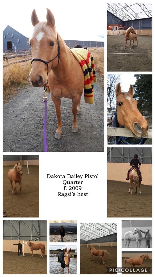 Dakota Bailey Pistol