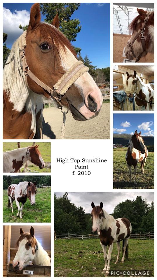 High Top Sunshine