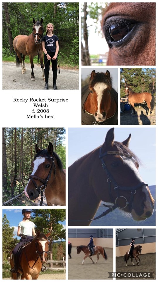 Rocky Rocket Surprise