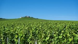 champagne distrikt og vinmarker