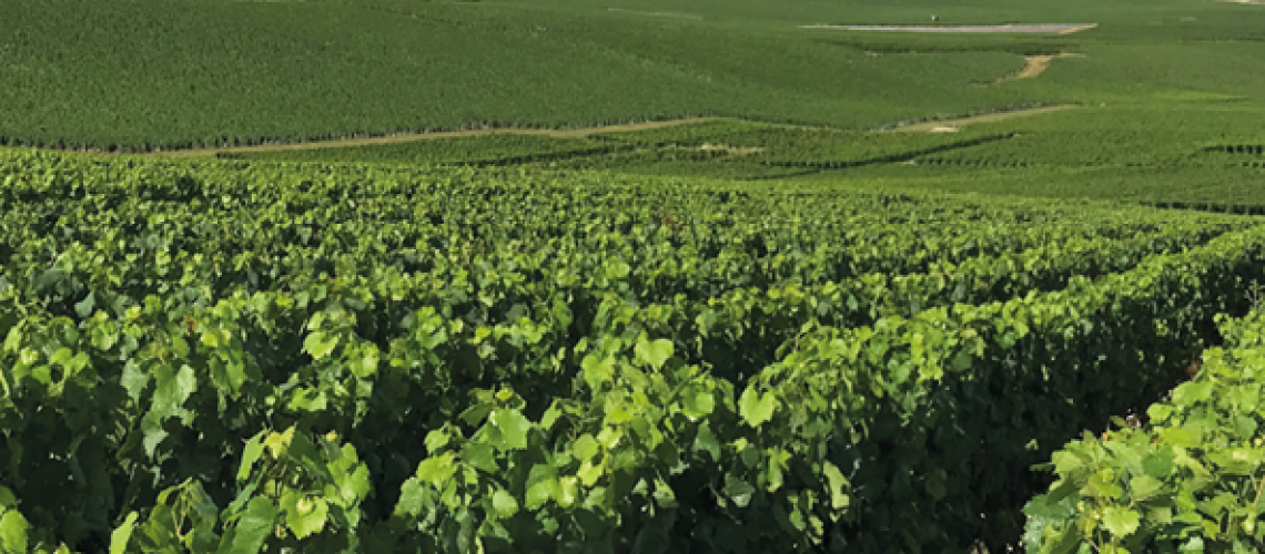 Header_vineyard