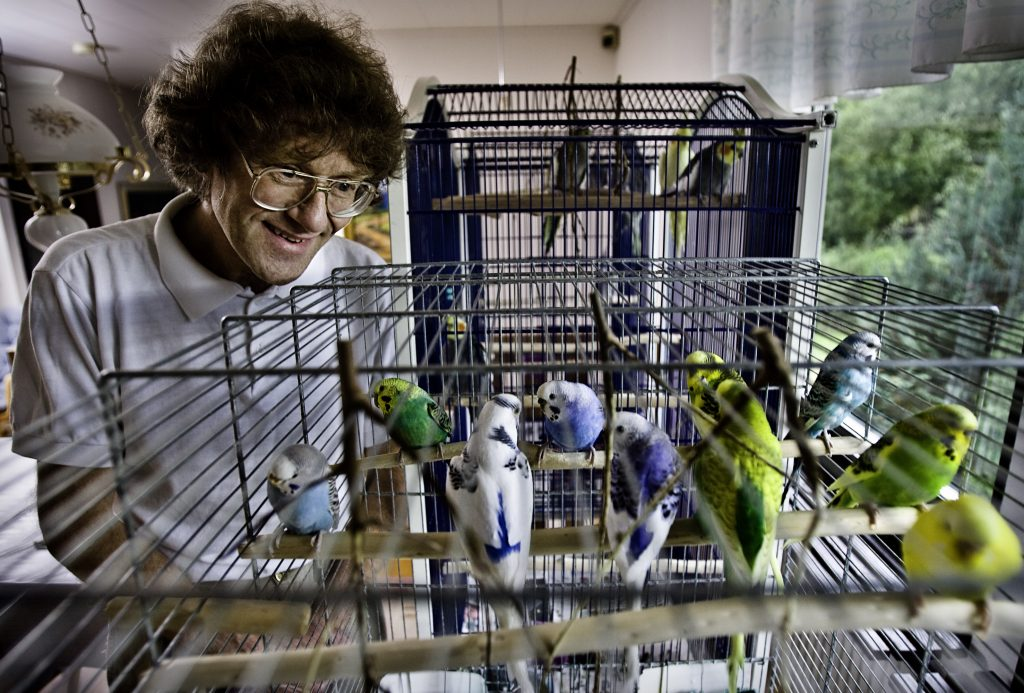 Peter Tössberg och Birgitta Magnusson Lever med fem gojor och två undulater *** Local Caption *** Paret har kommit ut med boken``Att leva med stora  och små papegojor