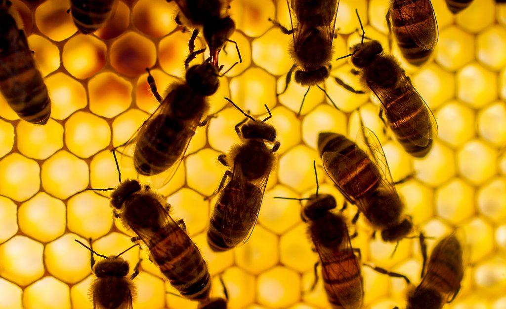 Joachim Petterson är självförsörjande på honung.