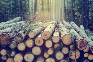 Sustainable Plastics: Scientists Make Versatile Polymer From Sugars in Wood (SciTechDaily)
