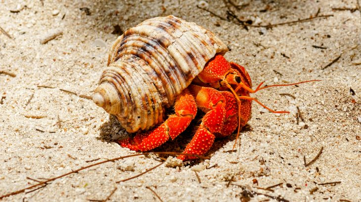 Crab shells could help pave the way for sustainable electronics (Earth.com)