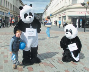 Pandas in Dundee City Centre