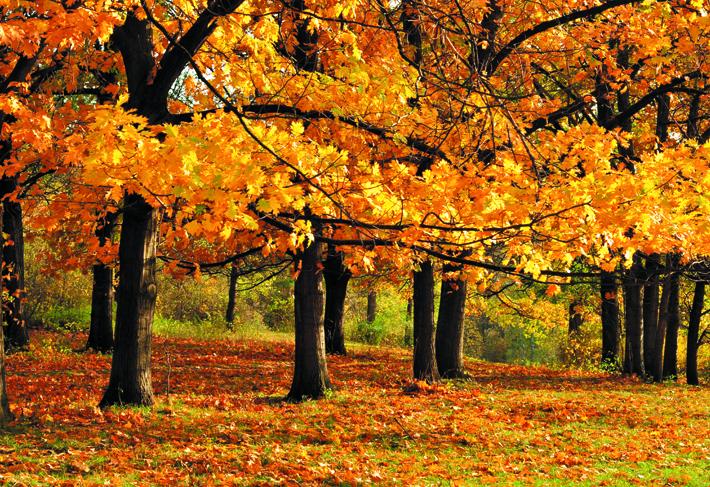 autumn-life-main