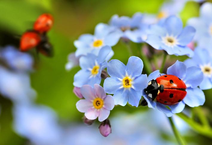 Natural Gardening Pest Defence