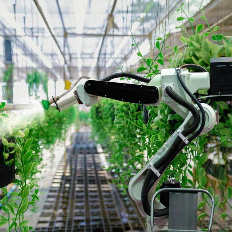 iot-farming-argriculture
