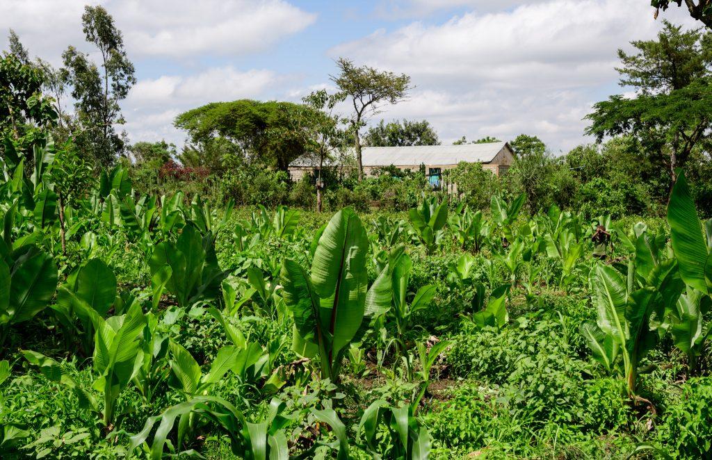 Bilde fra gården i sørlige Etiopia