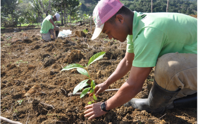Planting trees is no panacea for climate change, ecologist writes in Science commentary