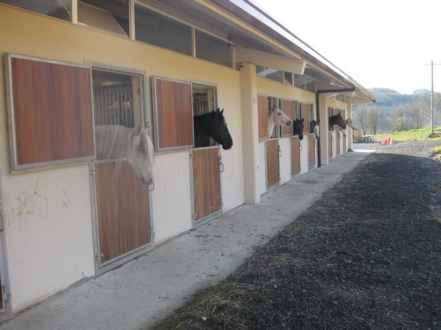 doma-de-caballos-1.jpg