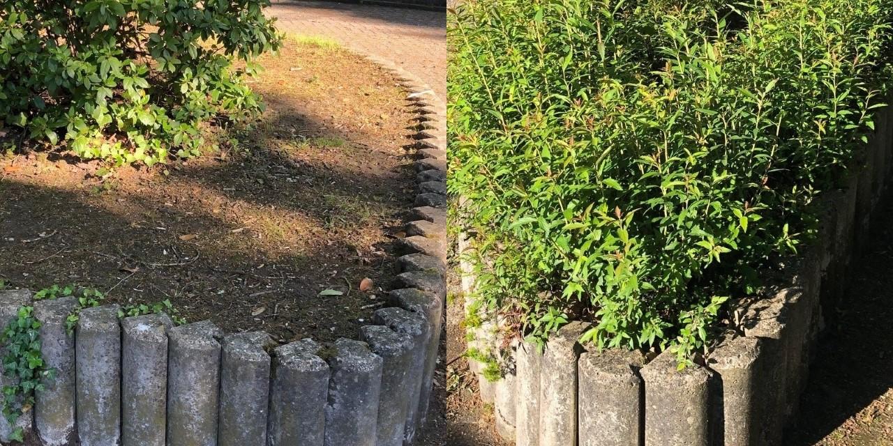 Gratis compost voor de groenbakken op de pleintjes