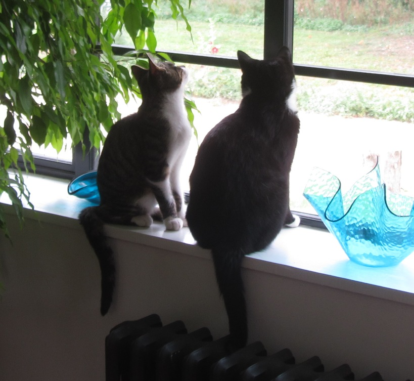 Control Tower Cats