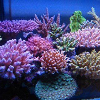 Alimentacion para Corales