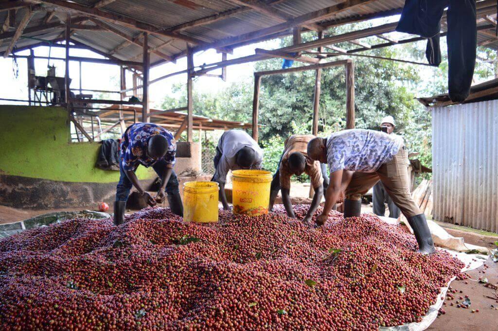 Origin Trip Kenya