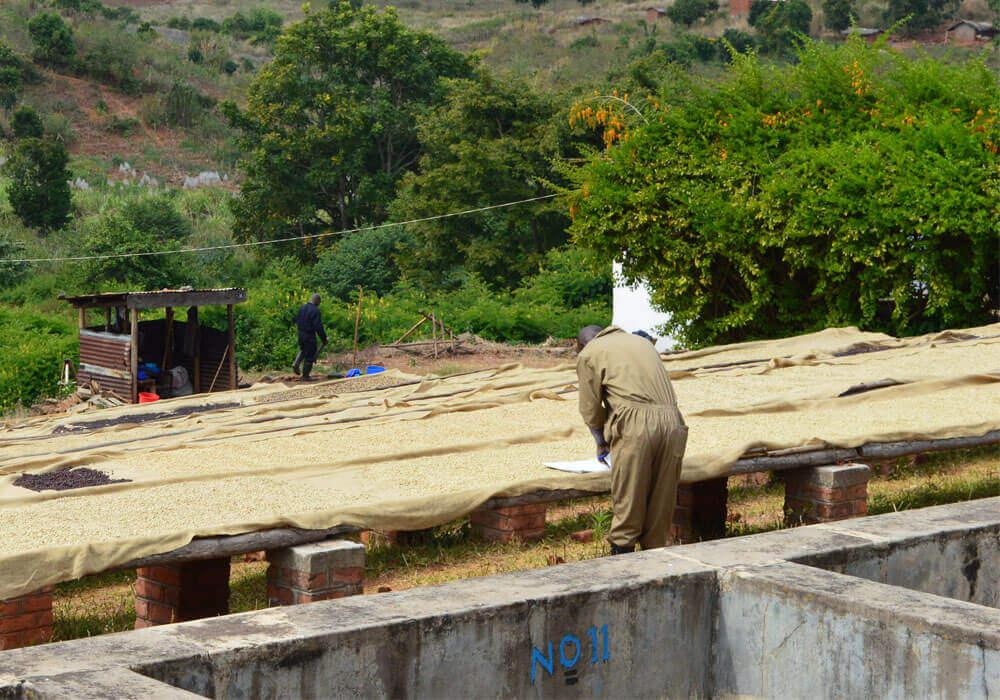 Malawi - drogen