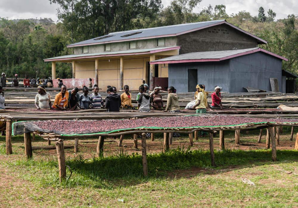 Ethiopia Adado - groep