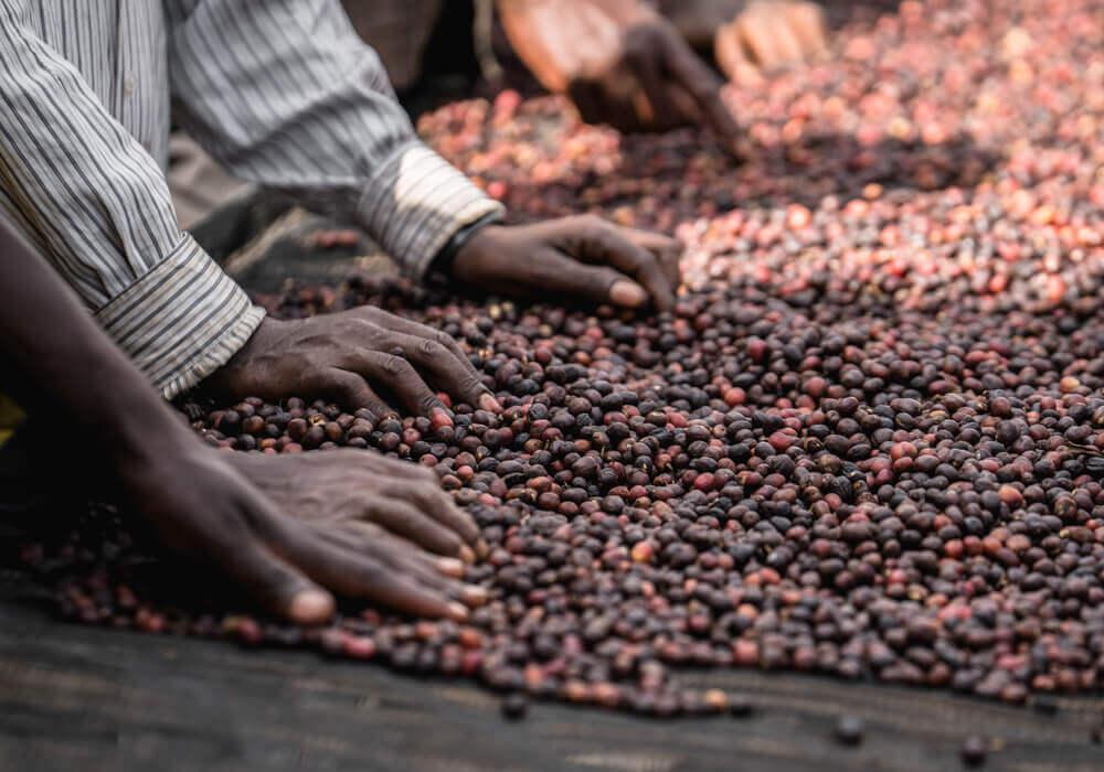 Ethiopia Adado - sorteren